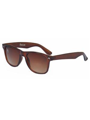 Allen Cate PremiumDSBrown Wayfarer Sunglasses